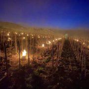 Des milliers de bougies impuissantes pour veiller sur les vignes et lutter contre le gel