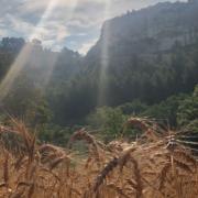Le temps des Moissons à Baumanière